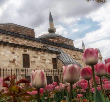 15 Nisan 2018 Pazar Günübirlik Konya Lale Tarlaları Fotoğraf Çekim Gezisi